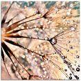 artland print op glas pluizenbol - kisses from rain (1 stuk) wit