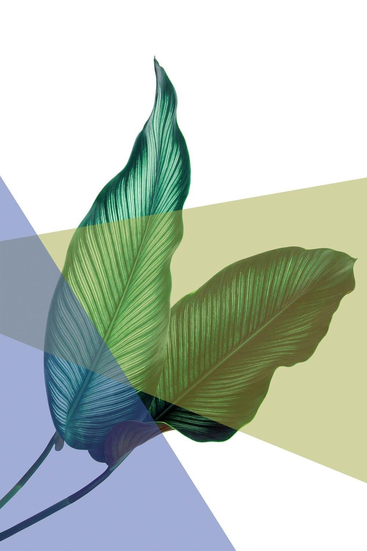 queence artprint op acrylglas »Blätter« online kopen op otto.nl