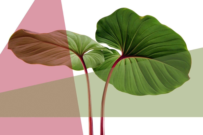 queence Artprint op acrylglas Bladeren nu online kopen bij OTTO
