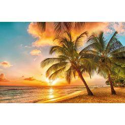 bmd fotobehang »barbados palm beach« multicolor