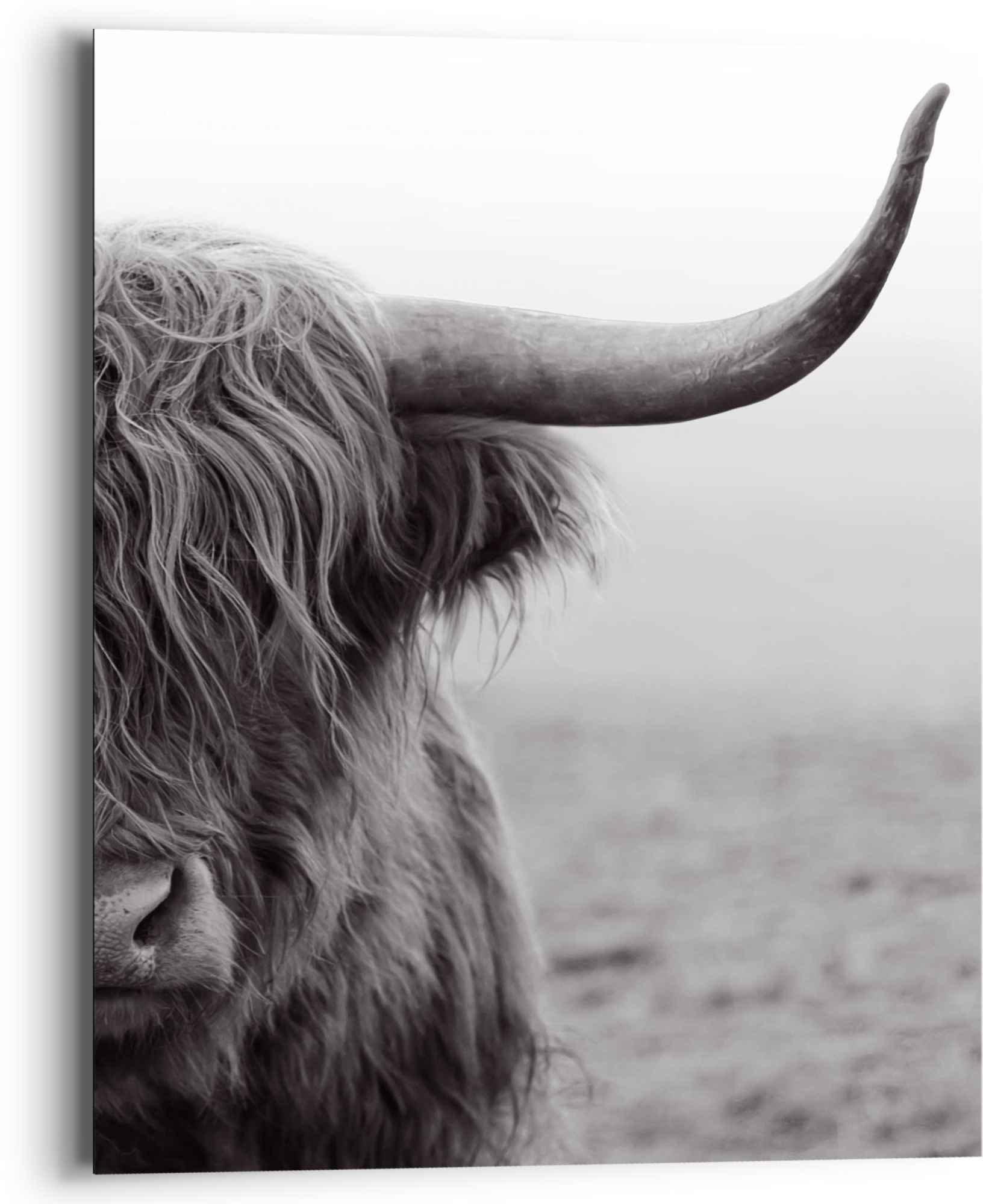 Reinders! artprint Highlander stier diermotief - close-up - Schotse hooglander (1 stuk) bij OTTO online kopen