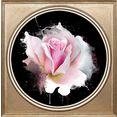 queence artprint op acrylglas »rose« roze