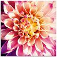 artland print op glas dahlia (1 stuk) roze
