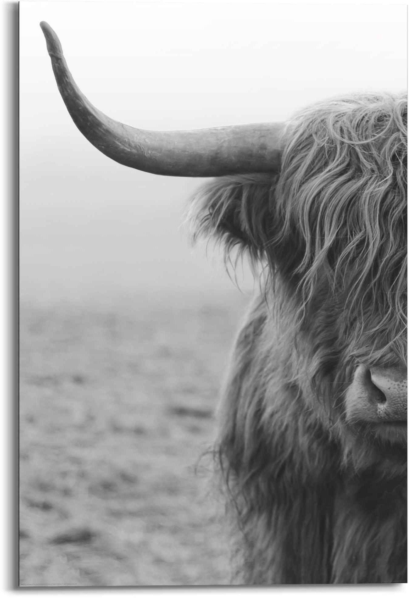 Reinders! artprint Highlander Schotse Schotse hooglander - stier - ecru (1 stuk) - verschillende betaalmethodes