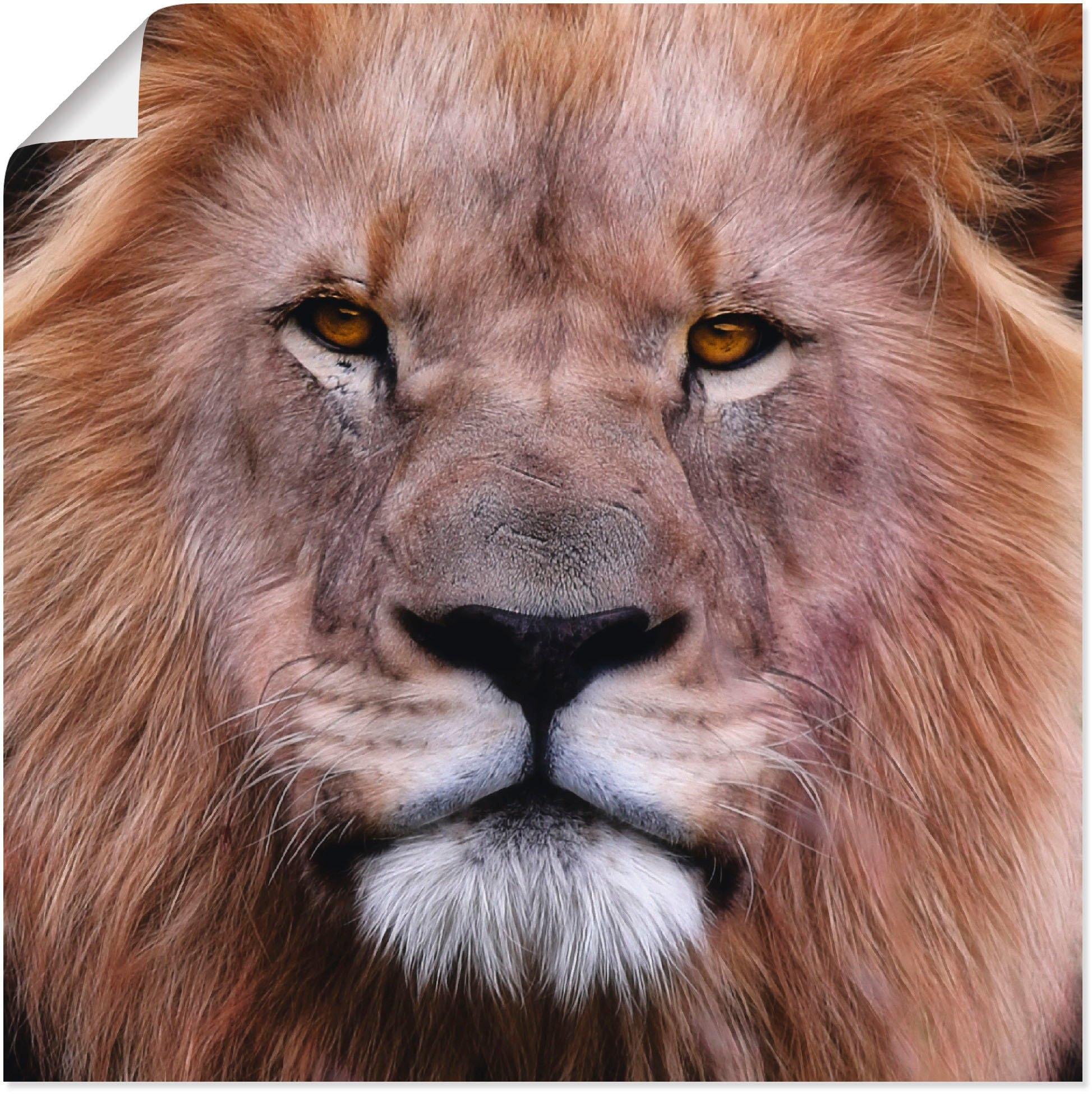 Artland artprint Koning van de leeuwen in vele afmetingen & productsoorten -artprint op linnen, poster, muursticker / wandfolie ook geschikt voor de badkamer (1 stuk) online kopen op otto.nl
