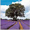 artland print op glas mooi lavendelveld in de zomer (1 stuk) paars
