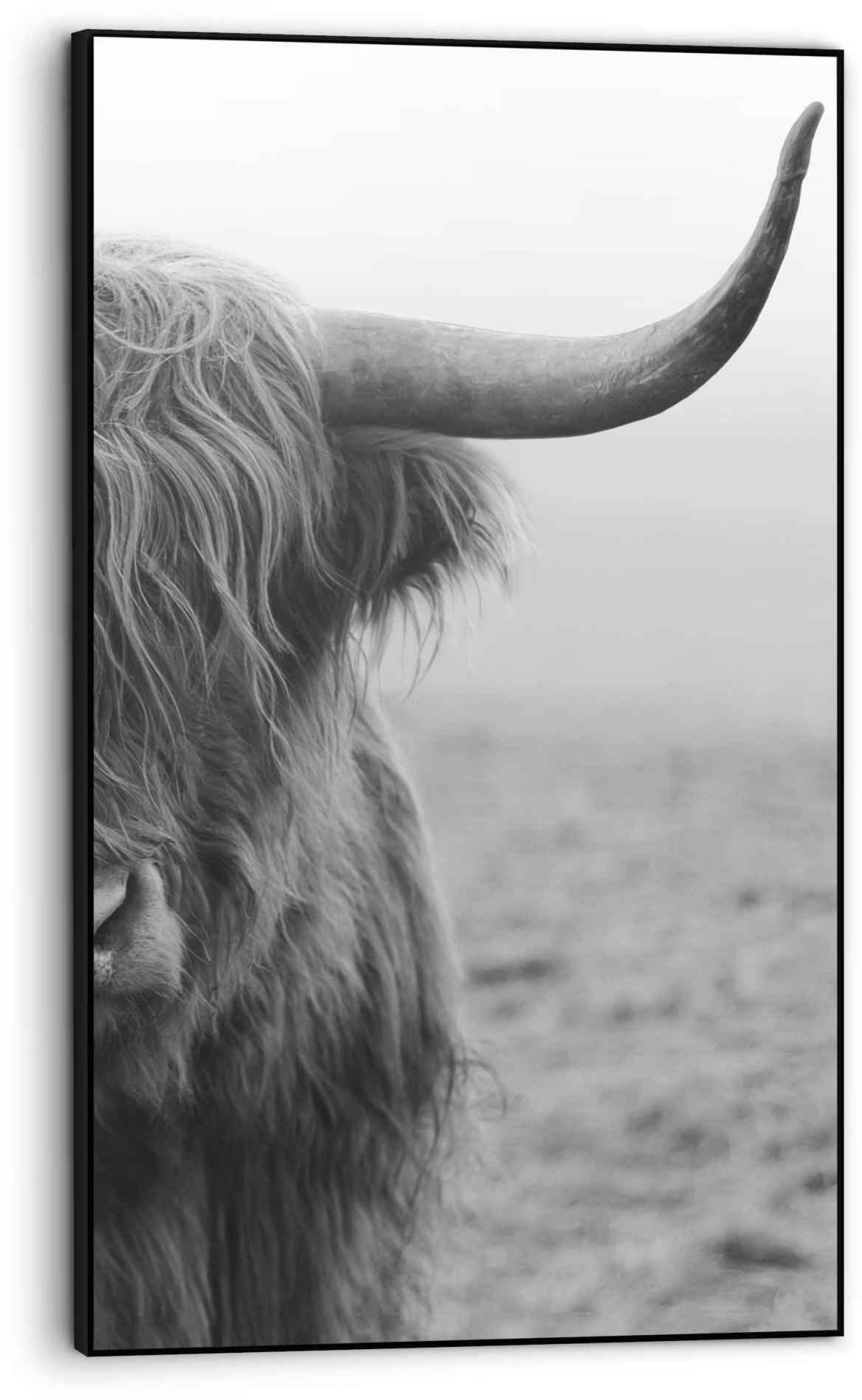 Op zoek naar een Reinders! Wanddecoratie Ingelijste print Highlander stier - Schotse - close-up (1 stuk)? Koop online bij OTTO