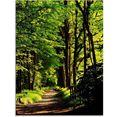 artland print op glas weg in het bos (1 stuk) groen