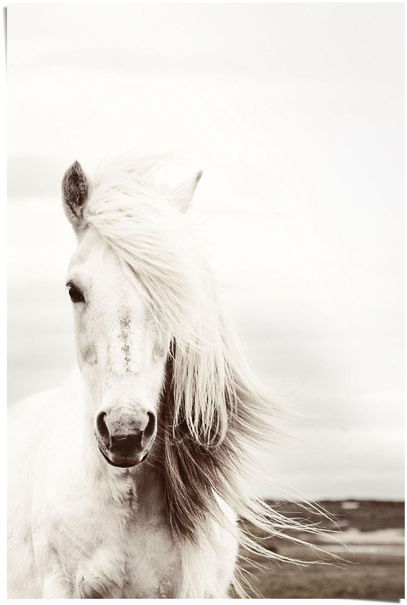 Reinders! Poster wit paard (1 stuk) veilig op otto.nl kopen