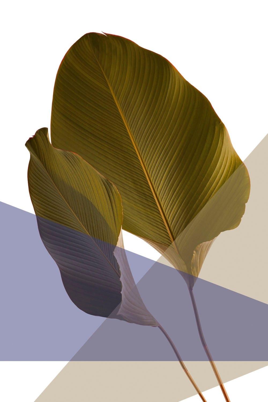 queence Artprint op acrylglas Bladeren veilig op otto.nl kopen