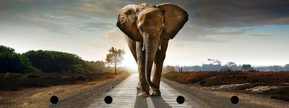 Spiegelprofi GmbH Artprint met lijst Street elephant (1 stuk) - gratis ruilen op otto.nl