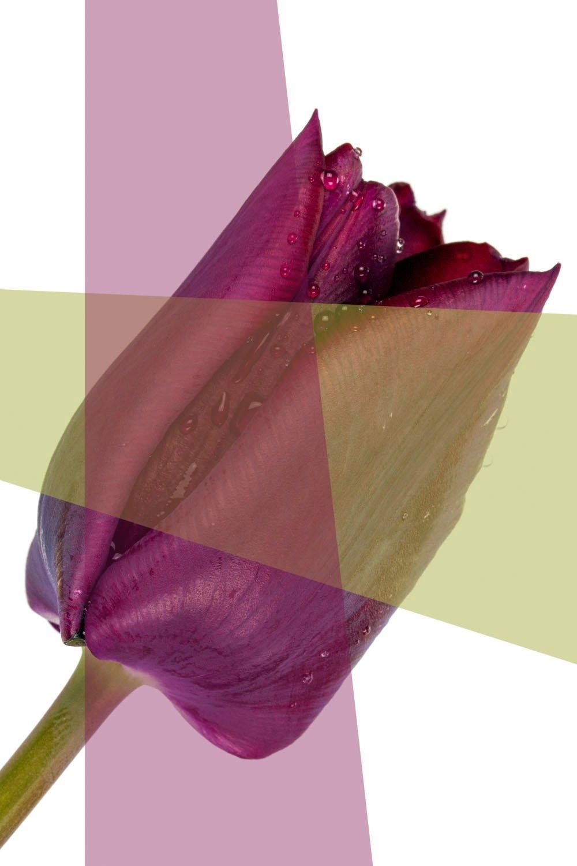 queence artprint op acrylglas Bloem bij OTTO online kopen