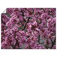 artland artprint japanse sierkersen bloem in vele afmetingen  productsoorten - artprint van aluminium - artprint voor buiten, artprint op linnen, poster, muursticker - wandfolie ook geschikt voor de badkamer (1 stuk) roze