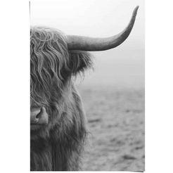 reinders! poster highlander bulle (1 stuk)
