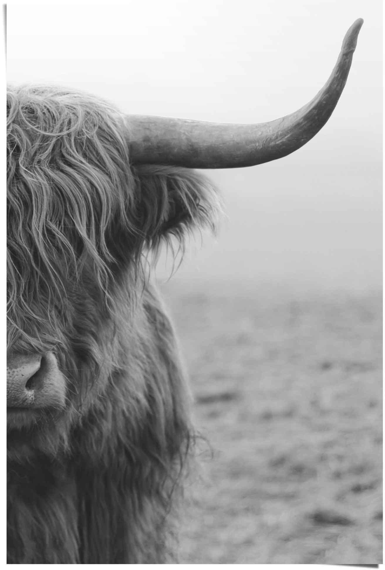 Reinders! poster Highlander stier (1 stuk) in de webshop van OTTO kopen