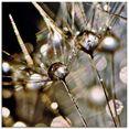 artland print op glas pluizenbol met waterdruppels (1 stuk) goud