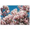 artland artprint »magnolie« roze