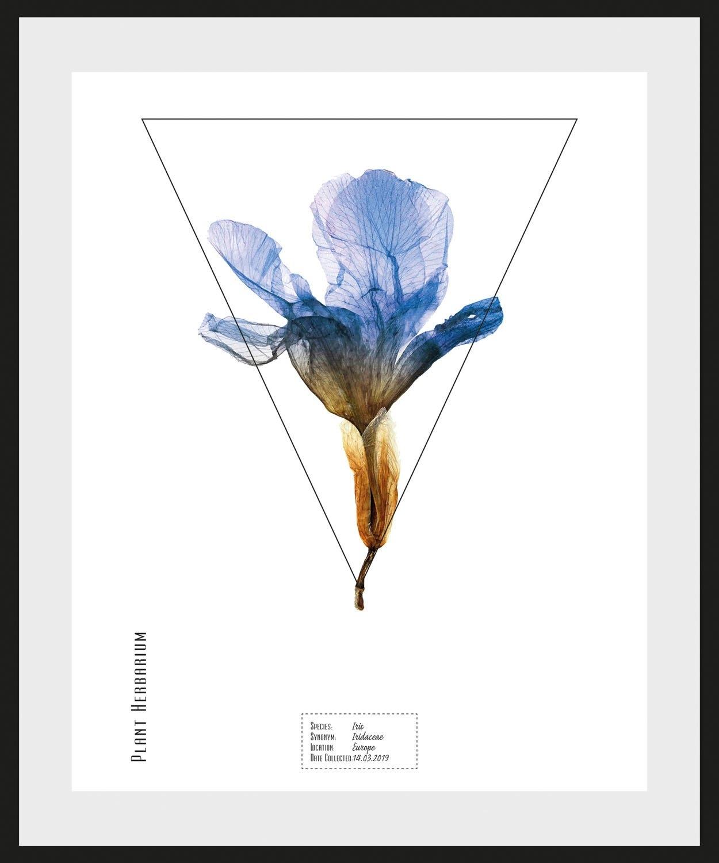 queence wanddecoratie Iris (1 stuk) in de webshop van OTTO kopen