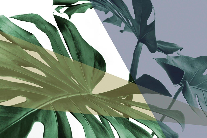 queence artprint op acrylglas »Blätter« goedkoop op otto.nl kopen