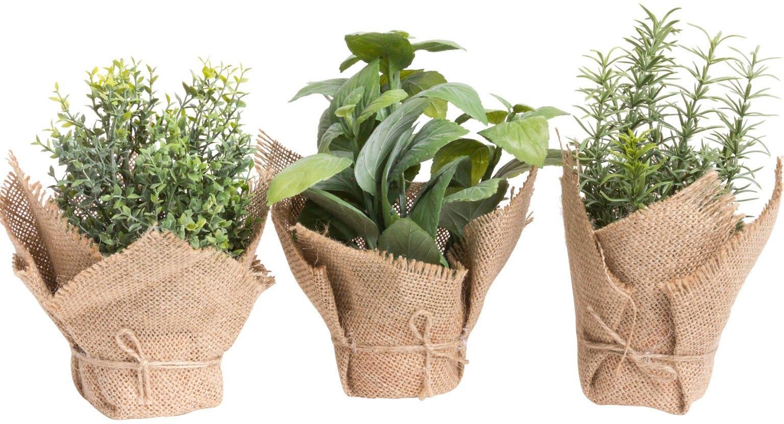 Botanic-Haus kunst-potplanten Kruiden (set, 3 stuks) - gratis ruilen op otto.nl
