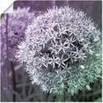 artland artprint paars sensatie i in vele afmetingen  productsoorten - artprint van aluminium - artprint voor buiten, artprint op linnen, poster, muursticker - wandfolie ook geschikt voor de badkamer (1 stuk) paars