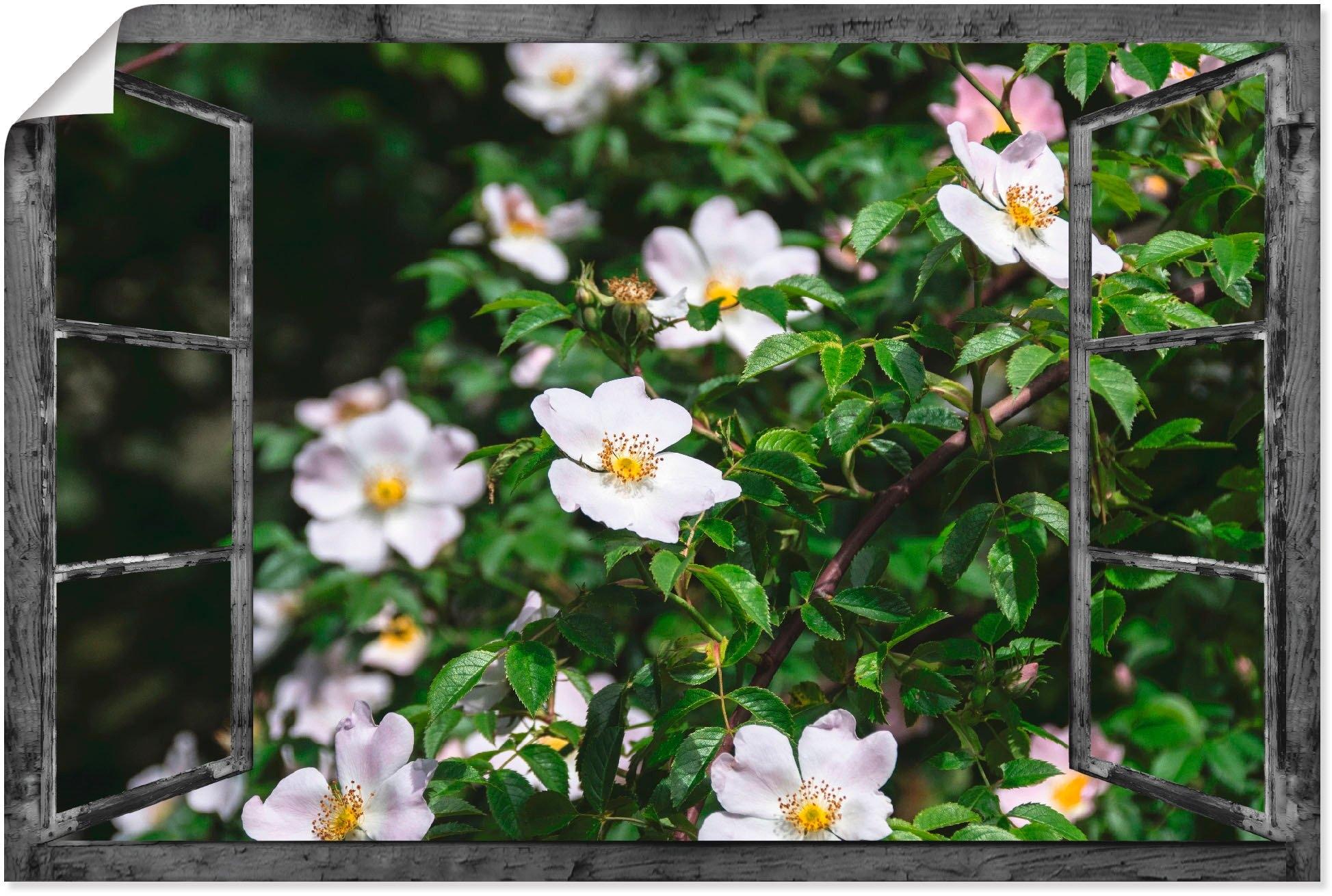 Artland artprint Blik uit het venster - wilde rozen in vele afmetingen & productsoorten - artprint van aluminium / artprint voor buiten, artprint op linnen, poster, muursticker / wandfolie ook geschikt voor de badkamer (1 stuk) in de webshop van OTTO kopen