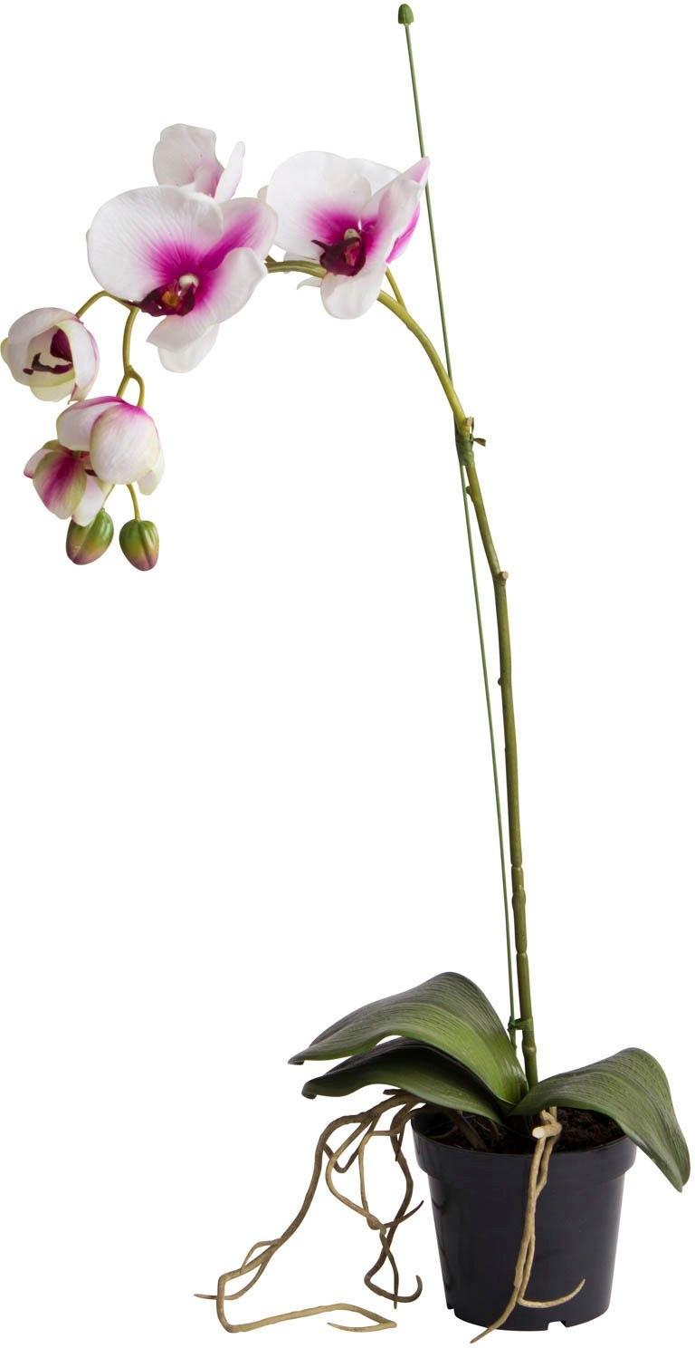 Botanic-Haus kunstorchidee Orchidee (1 stuk) voordelig en veilig online kopen