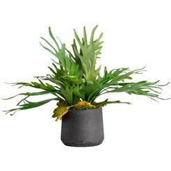 bluetenwerk kunstplant »staghorn« groen