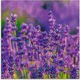 artland print op glas lavendelveld in tihany, hongarije (1 stuk) paars