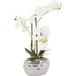 kunstorchidee »orchidee« wit