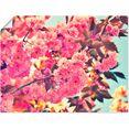 artland artprint kersenbloesem in de lente in vele afmetingen  productsoorten - artprint van aluminium - artprint voor buiten, artprint op linnen, poster, muursticker - wandfolie ook geschikt voor de badkamer (1 stuk) roze