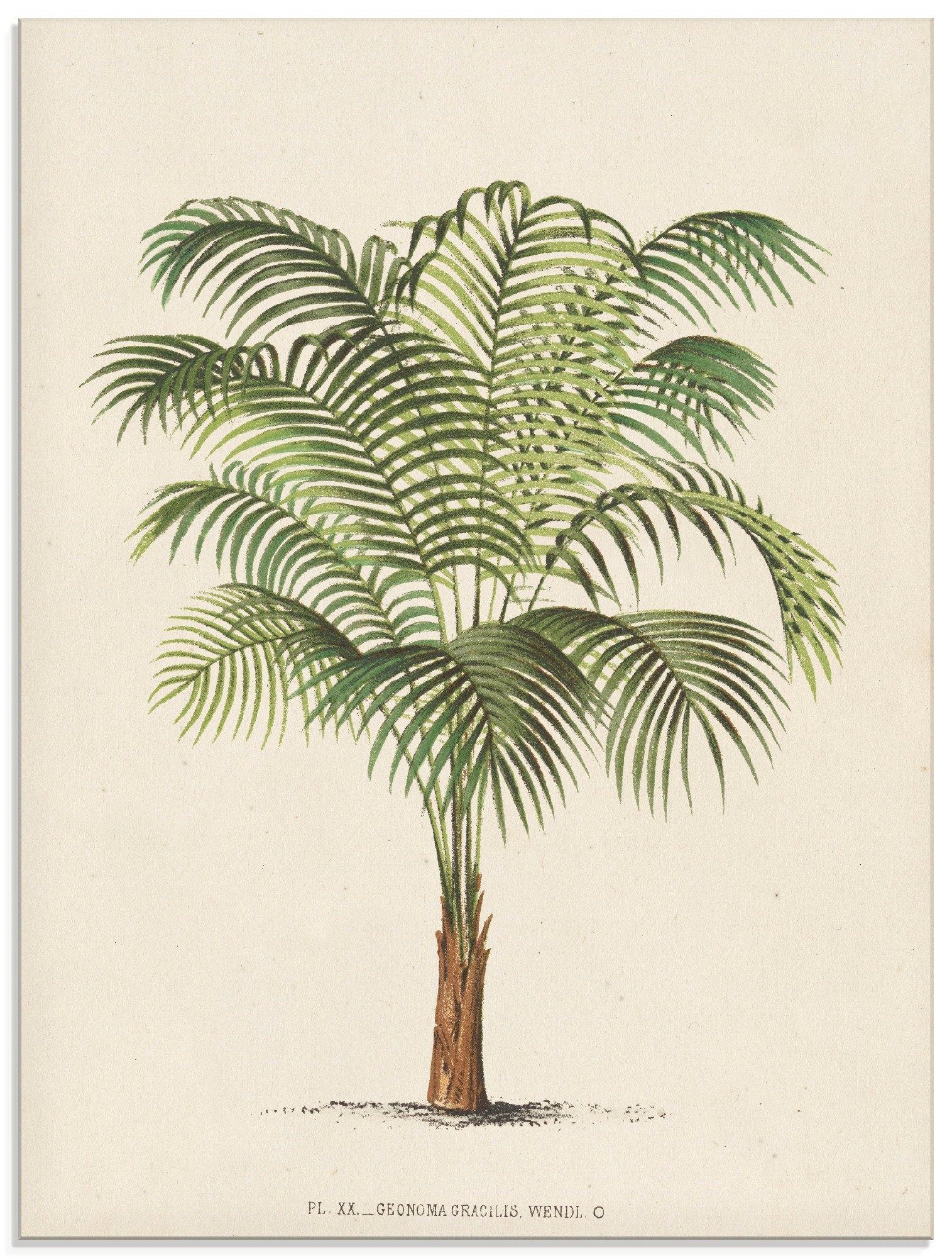 Op zoek naar een Artland print op glas Palm II (1 stuk)? Koop online bij OTTO