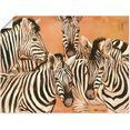 artland artprint zebra's in vele afmetingen  productsoorten - artprint van aluminium - artprint voor buiten, artprint op linnen, poster, muursticker - wandfolie ook geschikt voor de badkamer (1 stuk) oranje