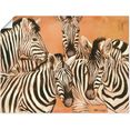 artland artprint »zebras« oranje