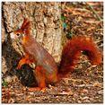 artland print op glas rode eekhoorntje wil naar boven (1 stuk) rood