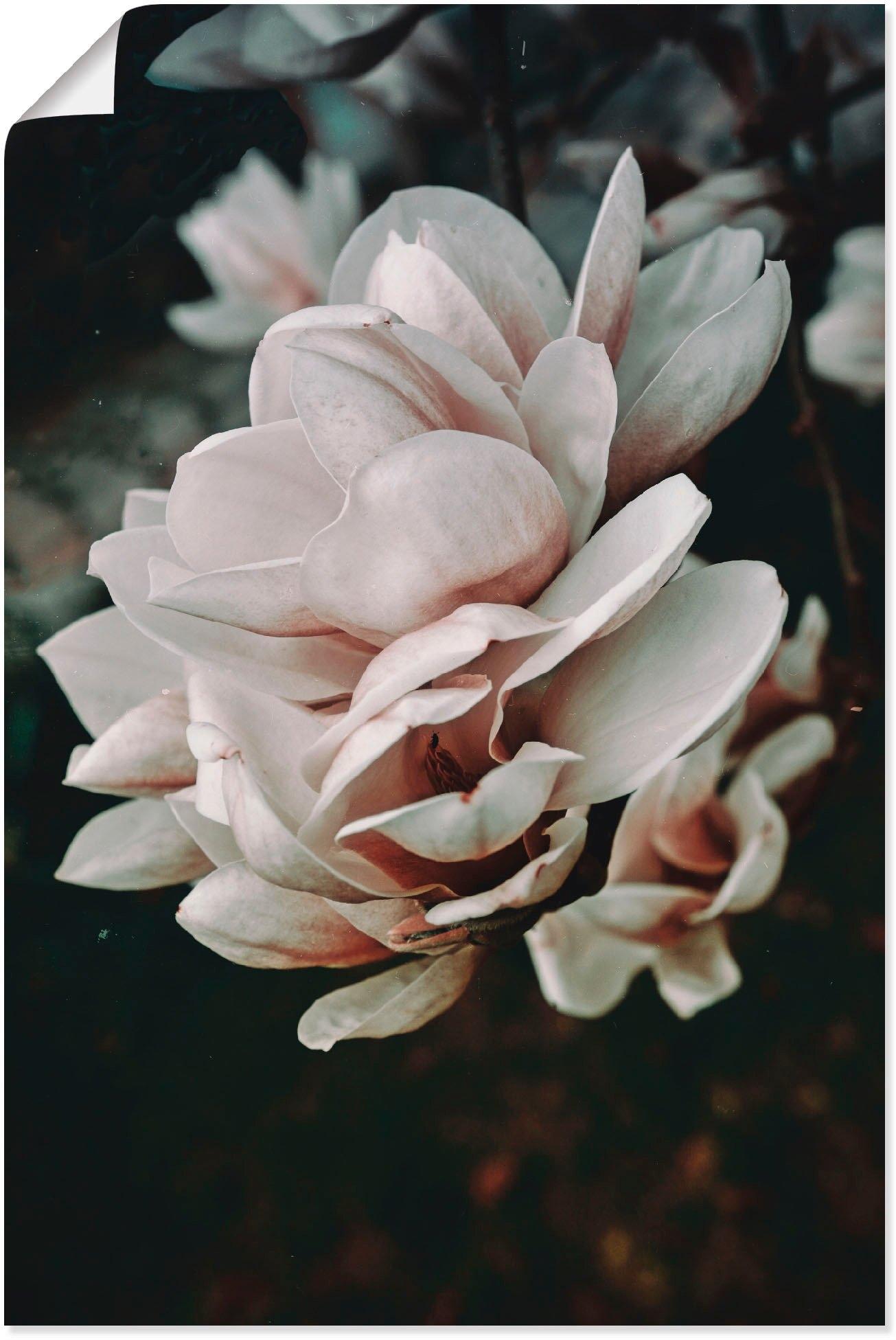 Artland artprint Magnolia II in vele afmetingen & productsoorten - artprint van aluminium / artprint voor buiten, artprint op linnen, poster, muursticker / wandfolie ook geschikt voor de badkamer (1 stuk) - gratis ruilen op otto.nl