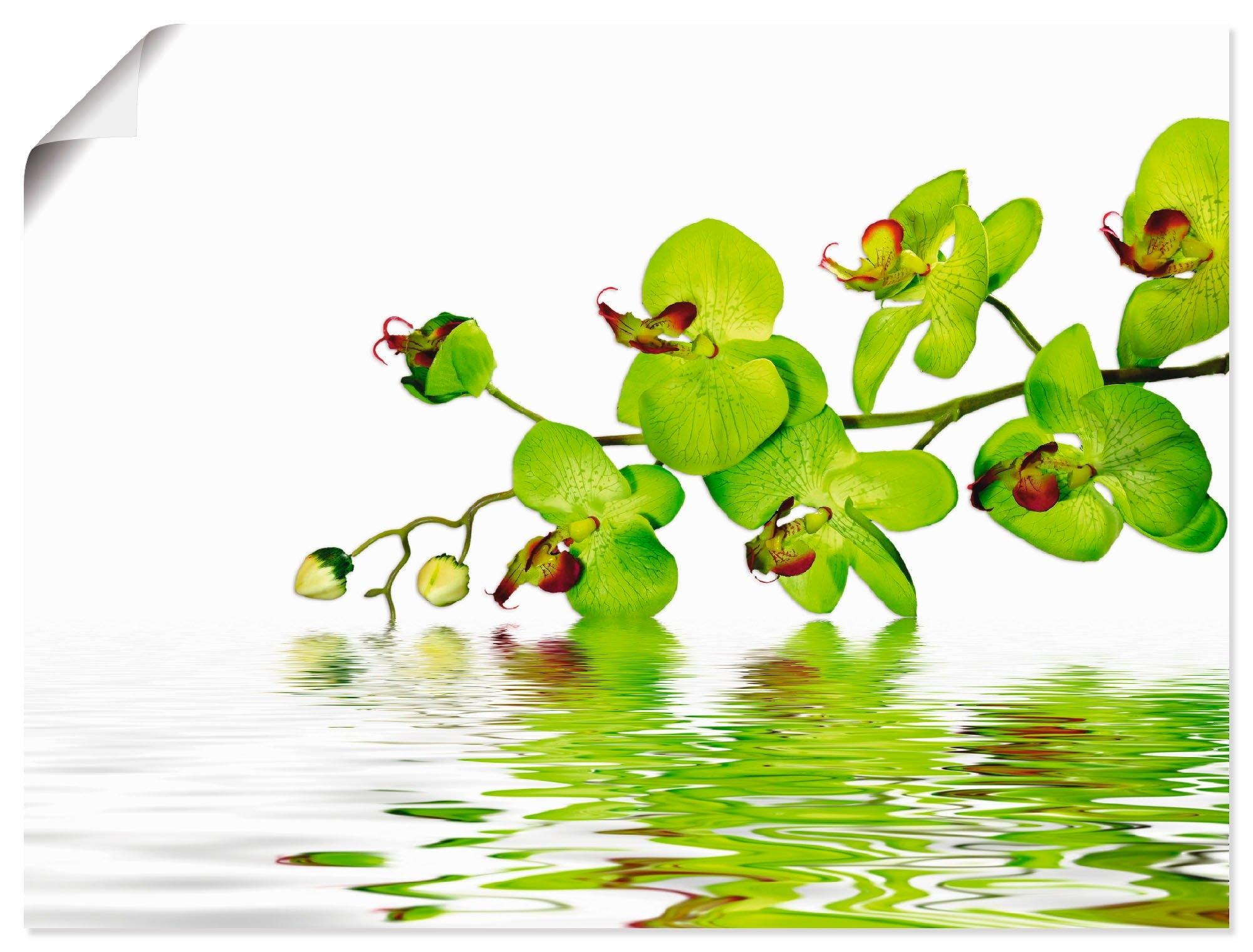 Artland Artprint Mooie orchidee met groene achtergrond in vele afmetingen & productsoorten - artprint van aluminium / artprint voor buiten, artprint op linnen, poster, muursticker / wandfolie ook geschikt voor de badkamer (1 stuk) online kopen op otto.nl