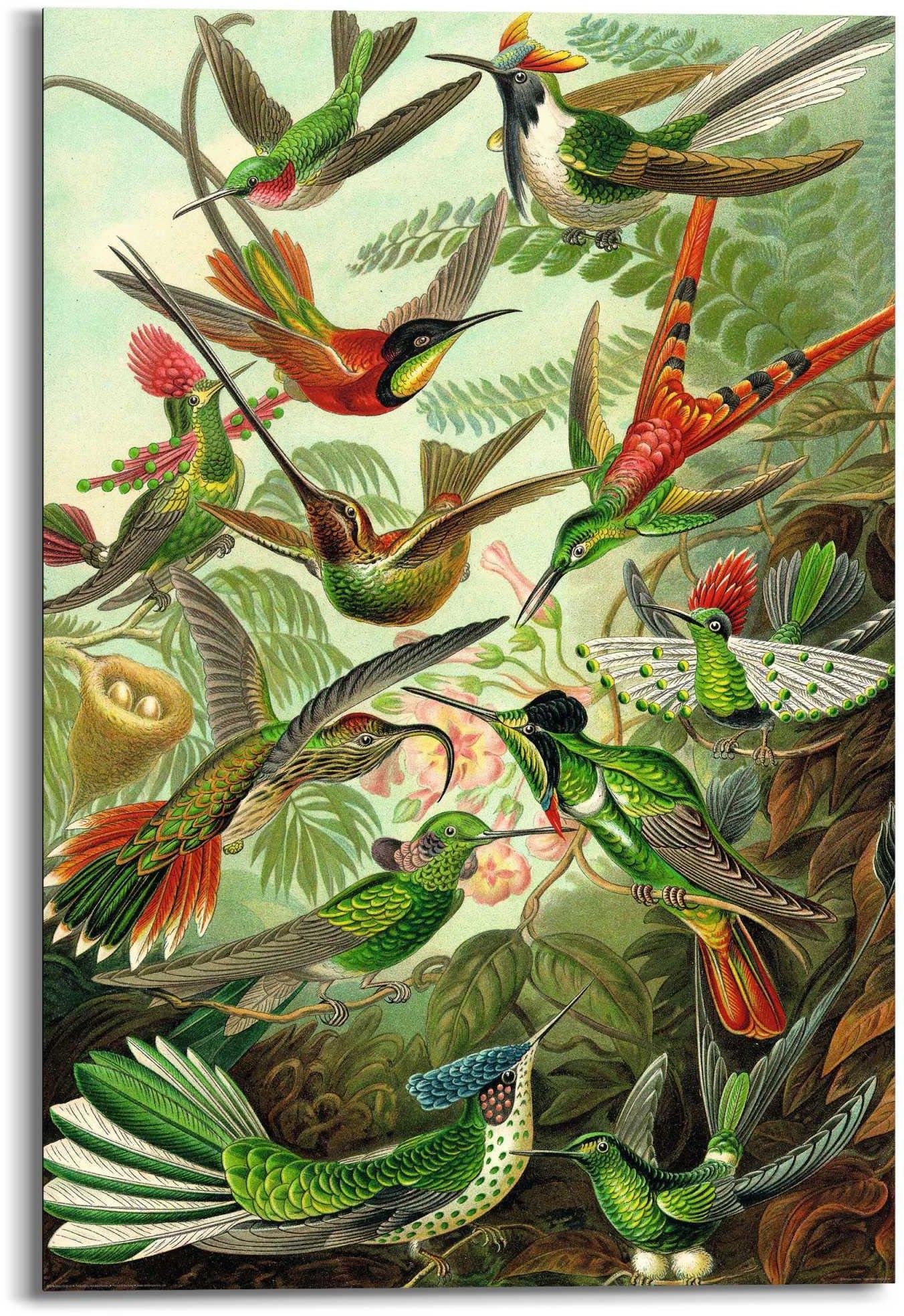 Reinders! artprint Wandbild Hummingbirds Vogel - Tiermotiv - Natur - Botanisch (1 stuk) - verschillende betaalmethodes