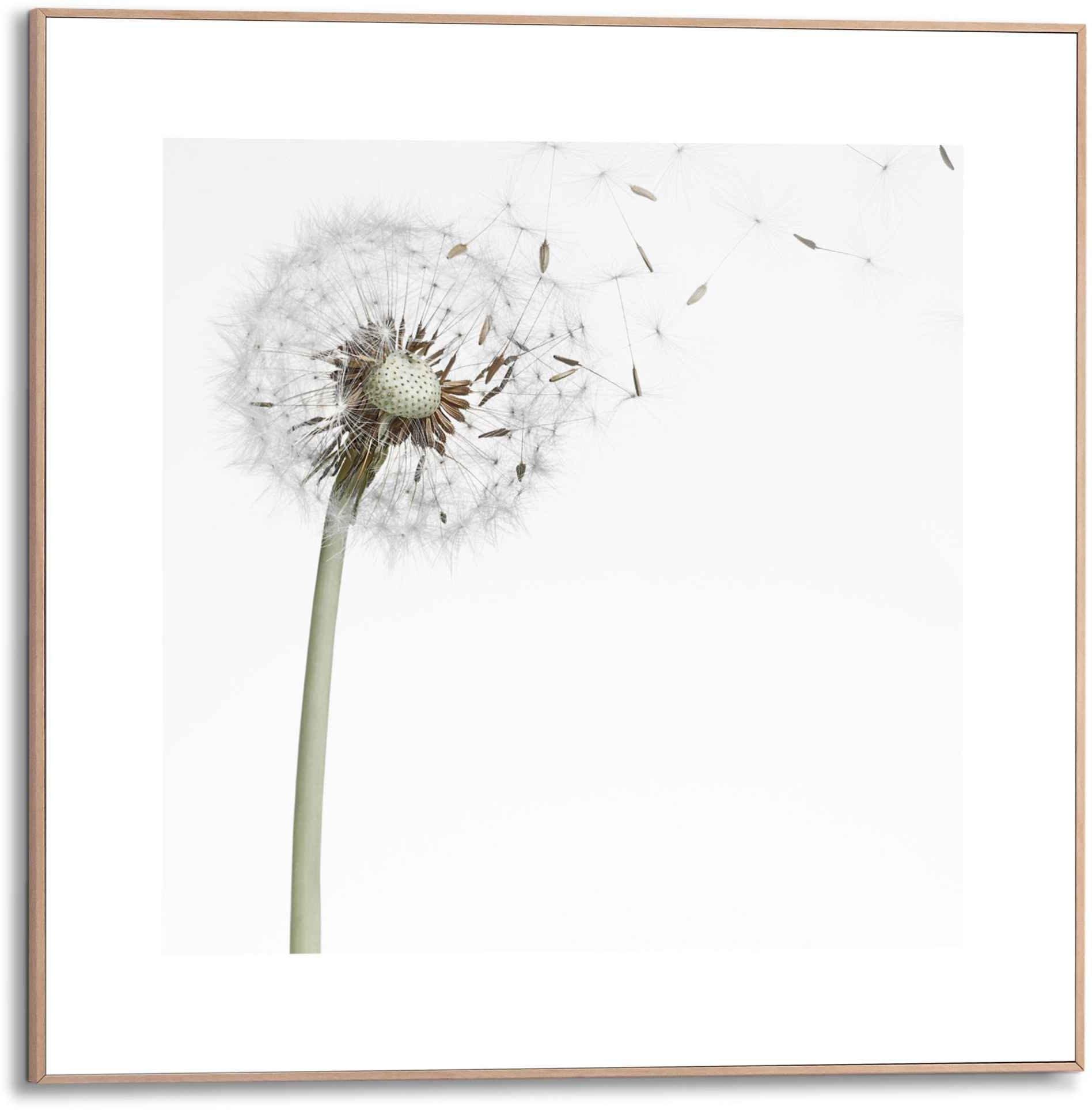 Reinders! wanddecoratie Ingelijste print pluizenbol (1 stuk) voordelig en veilig online kopen