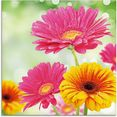 artland print op glas natuurlijke romantiek - gerberas (1 stuk) multicolor
