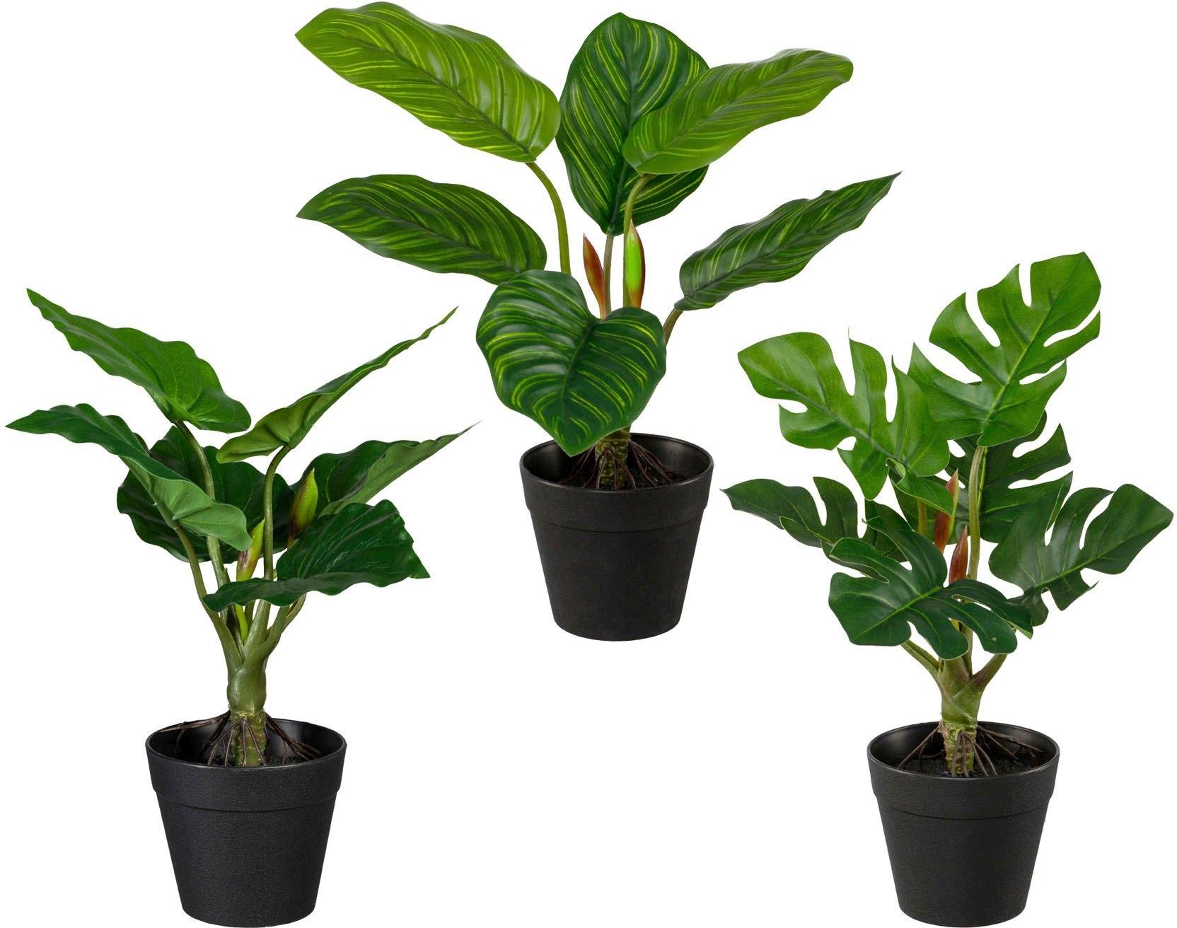 Creativ green kunst-potplanten Set van groene planten set van 3 (3 stuks) bestellen: 30 dagen bedenktijd