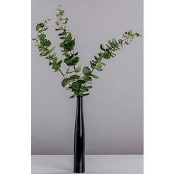 bluetenwerk droogbloem »eukalyptus« (set, 3 stuks) groen
