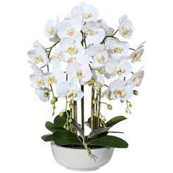 creativ green kunstplant vlinderorchidee in keramische kom (1 stuk) wit