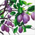 artland artprint violette pruimen in vele afmetingen  productsoorten - artprint van aluminium - artprint voor buiten, artprint op linnen, poster, muursticker - wandfolie ook geschikt voor de badkamer (1 stuk) paars