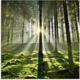 artland print op glas bos in tegenlicht groen