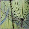 artland print op glas pluizebolzaadjes (1 stuk) groen
