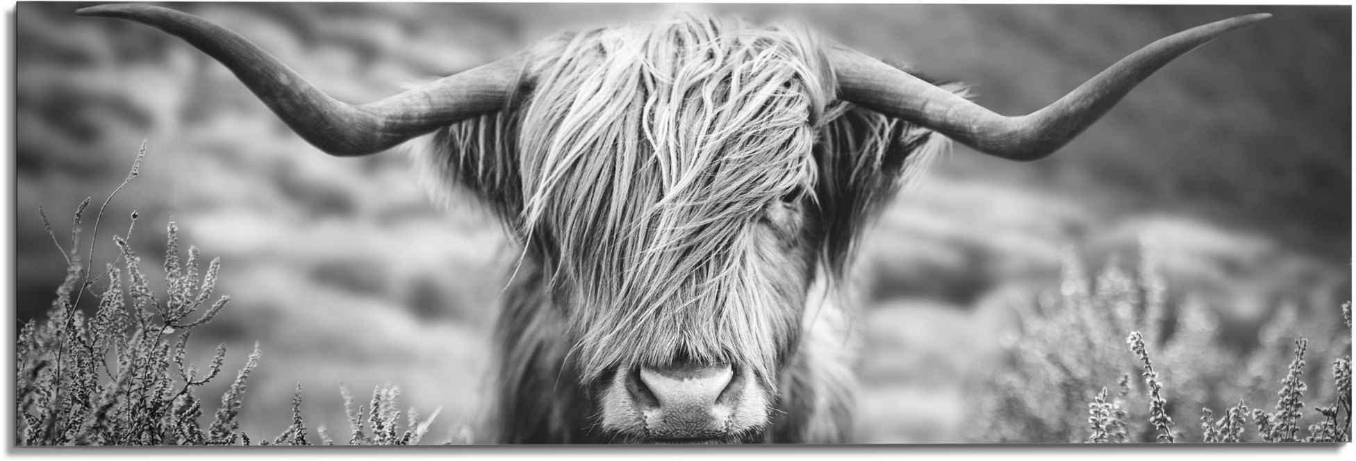 Reinders! artprint Highlander stier diermotief - close-up - Schotse hooglander beeld (1 stuk) bestellen: 30 dagen bedenktijd