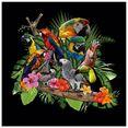 artland print op glas papegaaien grijze papegaai kaketoe jungle (1 stuk) multicolor