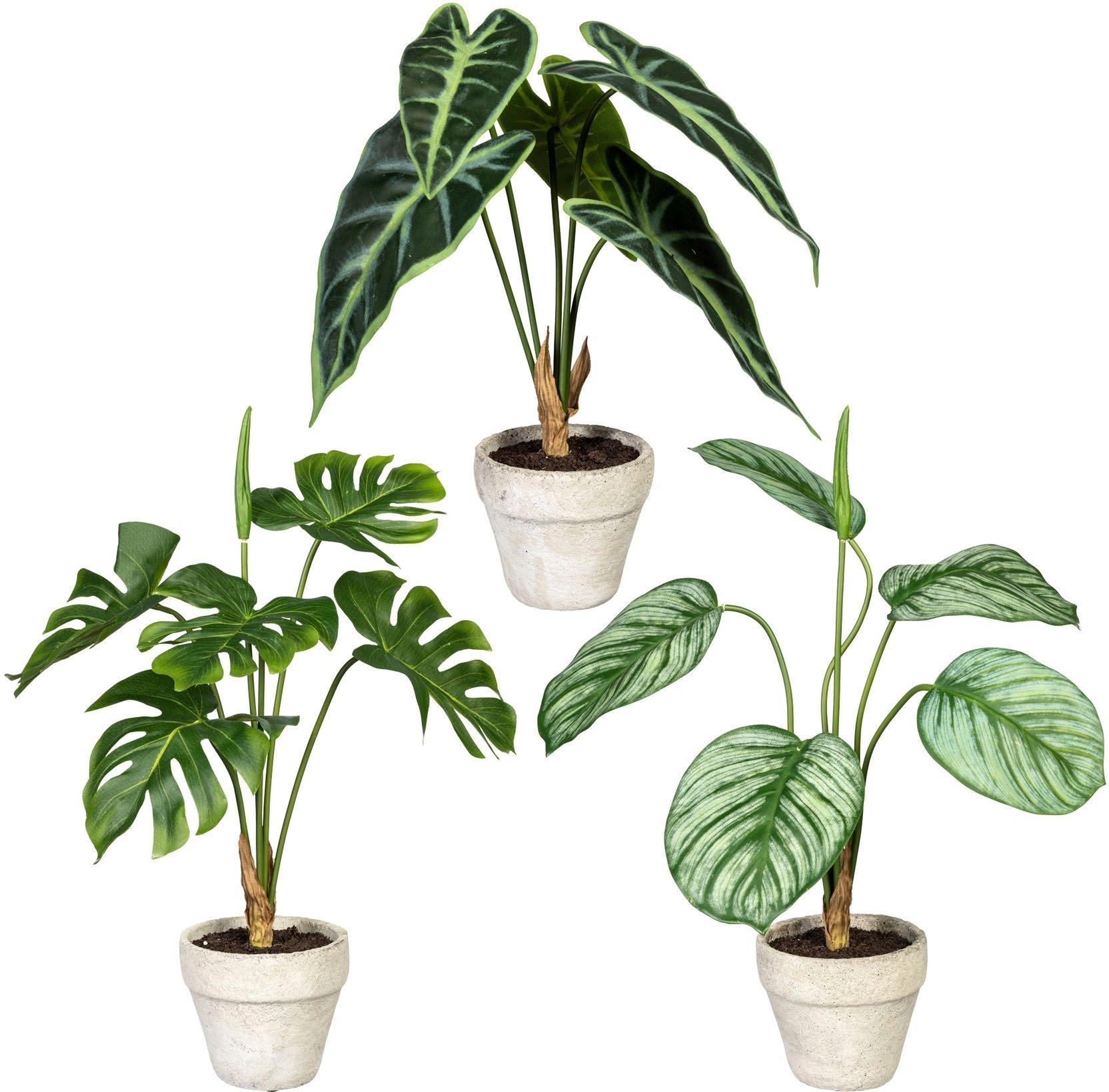 Creativ green kunst-potplanten Set van groene planten in een cementpot, set van 3 (3 stuks) bestellen: 30 dagen bedenktijd