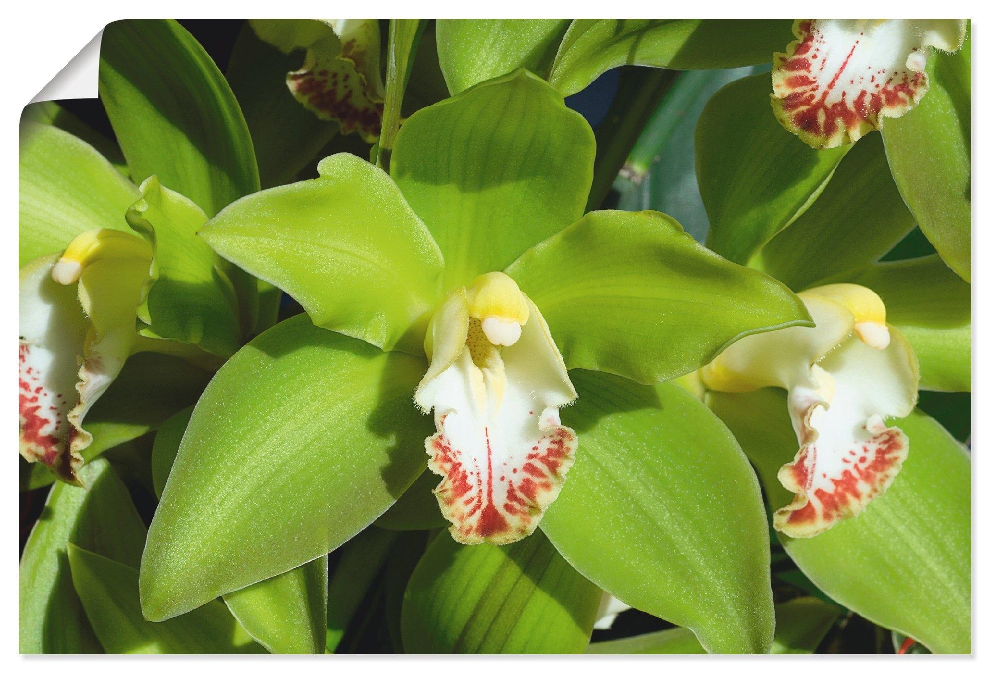 Artland artprint »Orchidee« goedkoop op otto.nl kopen
